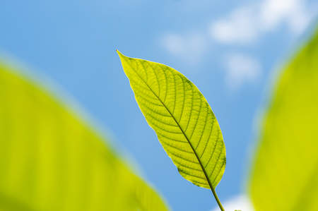Green leaf nature with branch on blue sky nature blurred background