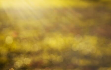 Abstract light bokeh gold nature with sunbeam in sunlight Stock Photo