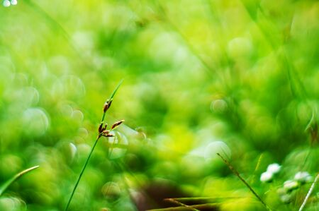 Abstract light bokeh green nature from green grass in sunlight Stock Photo