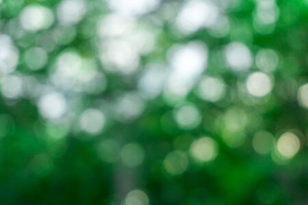 Nature bokeh with green leaf and sunlight in morning light