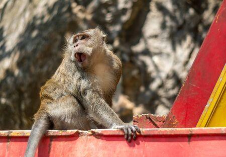 Asia monkey wildlife on blurred background