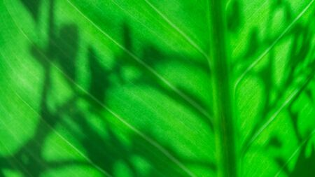 Green leaf with shadow of leaves nature texture background