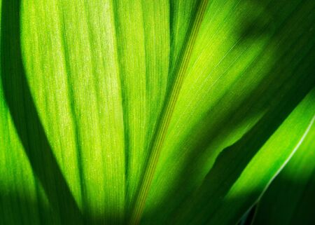 Green leaf with shadow blurred background Imagens