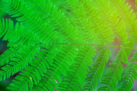 Green leaf nature with branch on light bokeh nature blurred background Imagens