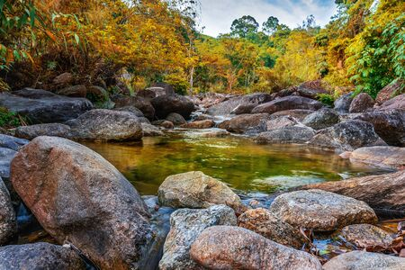 River stone and tree colorful, View water river tree, Stone river in multi color tree leaf in forest