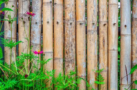 Old bamboo fence with flower in nature background