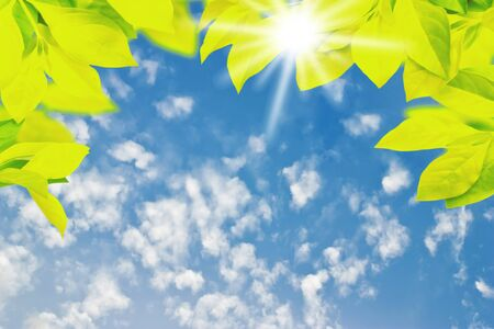 Green leaf with white cloud and blue sky copy space for design Imagens