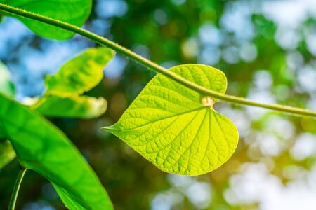 Green leaf nature with branch on light bokeh nature blurred background Stok Fotoğraf