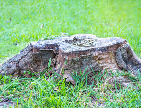 Rotten wooden on green grass blurred background, Selective focus