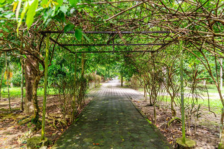 Way in garden park with green leaf nature background