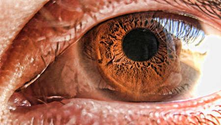 brown eye: first plan of a brown eye