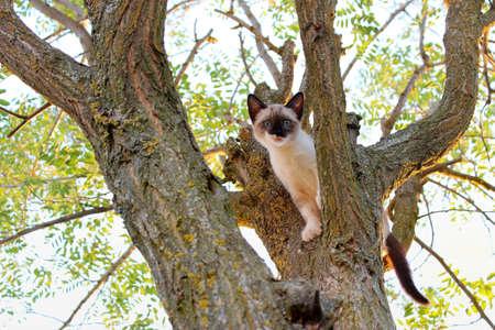 kleine Katze stecken in einem Baum