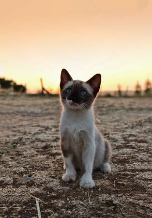 mustaches: small cat in the field