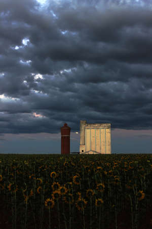 silo: Silo with sunflowers on a stormy night