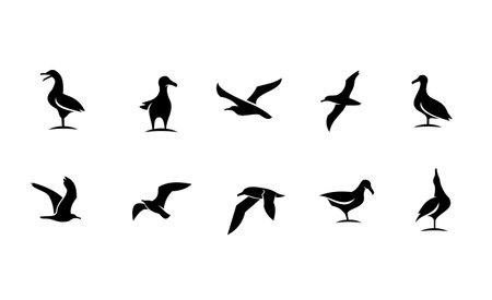 set collection seagull bird silhouette black logo icon design isolated white background