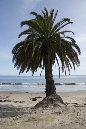 Lone Palm on Beach Stock fotó