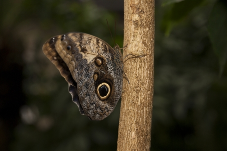 Brown Butterfly on Tree Trunk