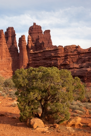A green pinon sits on a red desert floor made of sand and small stones