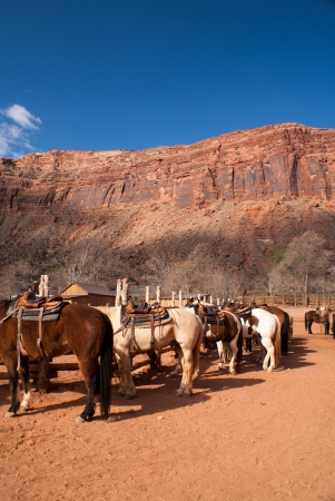 A horse corral in a desert scene    Stock fotó