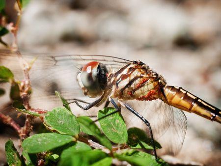 Dragonfly Stock Photo - 5629583