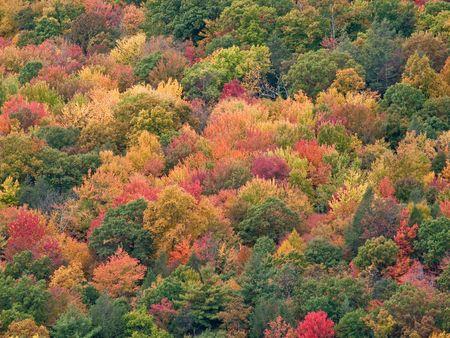 Caduta di foglie in Ny stato Shawanagunk Monti (The Gunks)