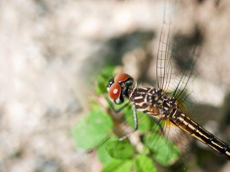 Dragonfly Stock Photo - 5735706