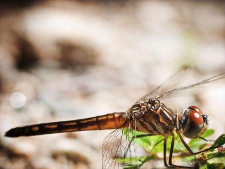 Dragonfly Stock Photo - 5735679