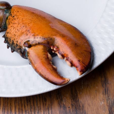 Lobster Claw Stock Photo