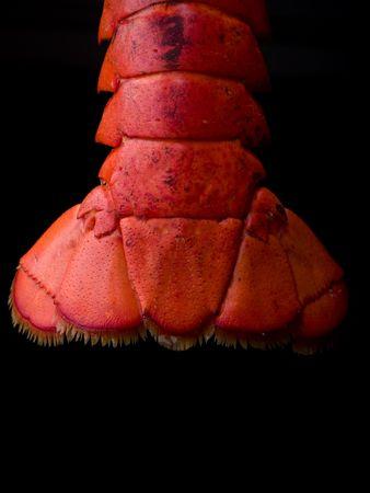 lobster: Lobster Tail