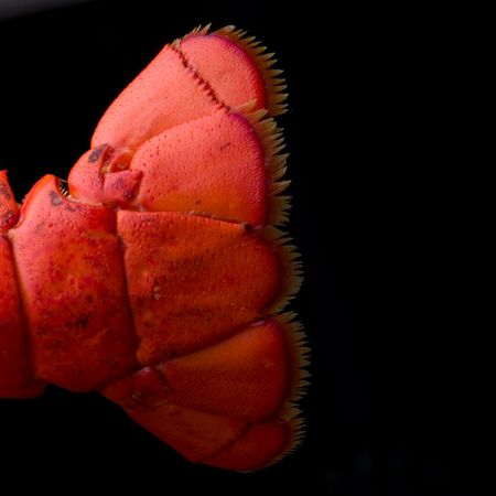 lobster tail: Lobster Tail