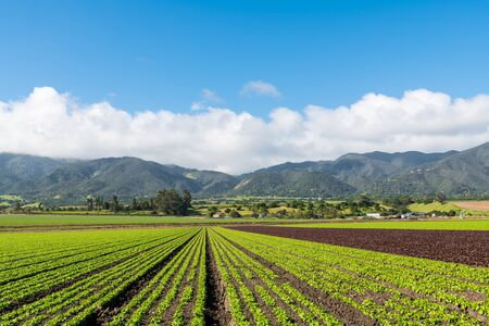 Agricultural scene of a field of green and red lettuce with rows pointing in perspective to mountains under a beautiful blue sky with puffy white clouds in the Salinas Valley near Monterey, California Stok Fotoğraf