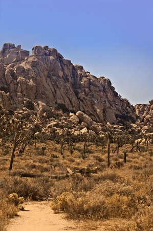 joshua tree national park: Desert Trail in Joshua Tree National Park