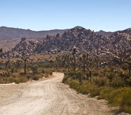 joshua tree national park: Desert Road in Joshua Tree National Park