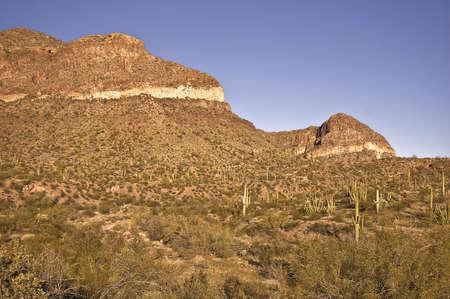 Saguaro studded mountain