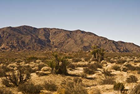 Mojave Desert Scene Stock Photo
