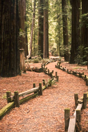 Trail through the Big Trees photo
