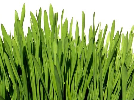 Patch of Grass on a White Background Stock Photo