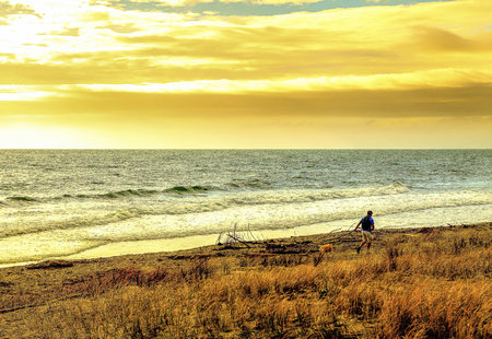 oceanscape: Sunset seascape seaside beach with man walking dogs
