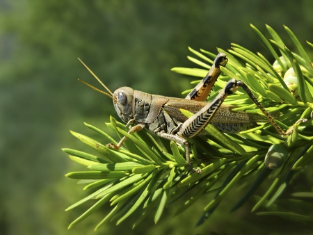 Grasshopper sitting on a branch