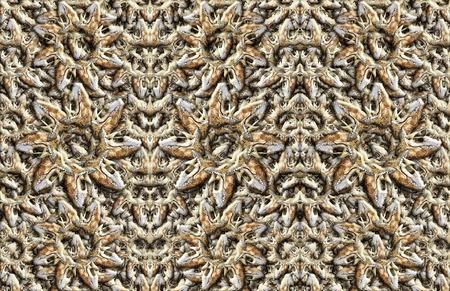 私の写真の様々 な哺乳類の頭蓋骨のデジタル合成