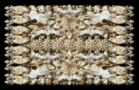 各種哺乳動物の頭蓋骨の私の写真のデジタル合成。