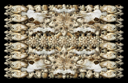 Digital composite of my photographs of the skulls of various mammals.