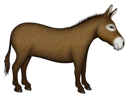 ロバのデジタル イラストレーション — 側面図。