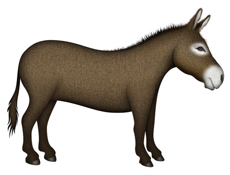 Digital illustration of a donkey — side view.