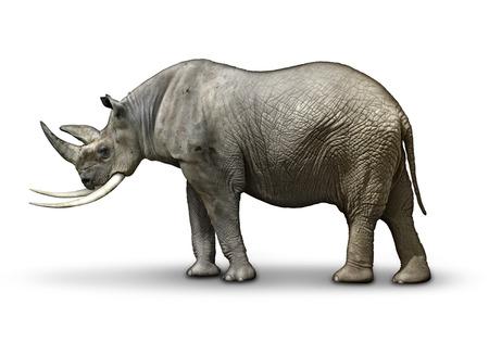 Republican In Name Only, represented by a half rhinoceros, half Elephant. Reklamní fotografie