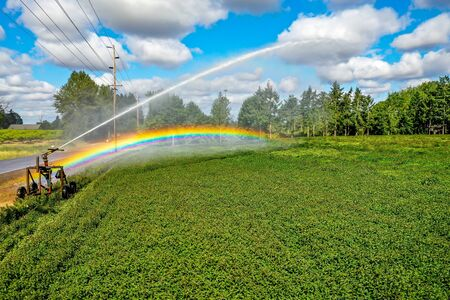 In sunlight rays, automatic sprinkler irrigation system spraying water on the crops in a farm field. Beautiful rainbow is prominent in the scene.
