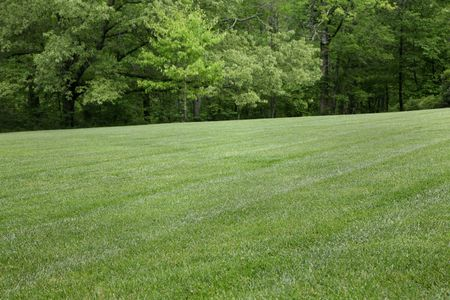 Pastoral lawn and wooded setting with ample copy space Stock Photo - 5432611
