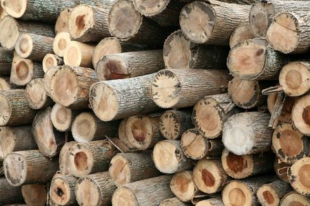 recently: Recently cut trees are stacked at the sawmill.