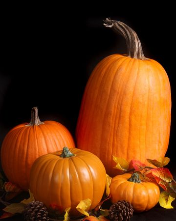 Dramatic image of 4 pumpkins on a black background Stock Photo