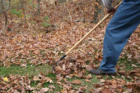 Raking Herbst Laub  Standard-Bild